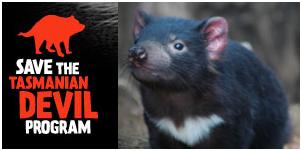Save the Tasmanian Devil Appeal