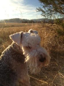 Gunner at sundown