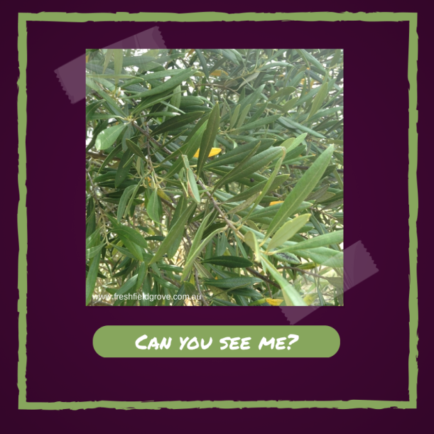 Can you see me- (1)