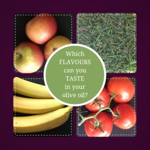 Olive oil flavour descriptors