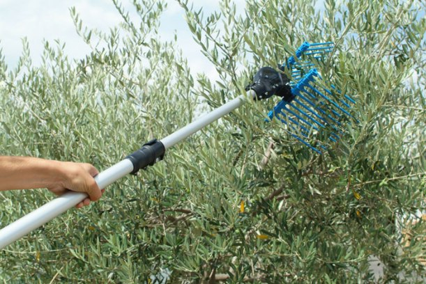 Campagnola Alice olive harvester