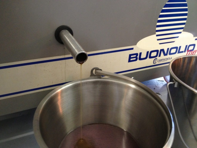 EVOO flowing (ok, maybe trickling is more accurate) out of our press.