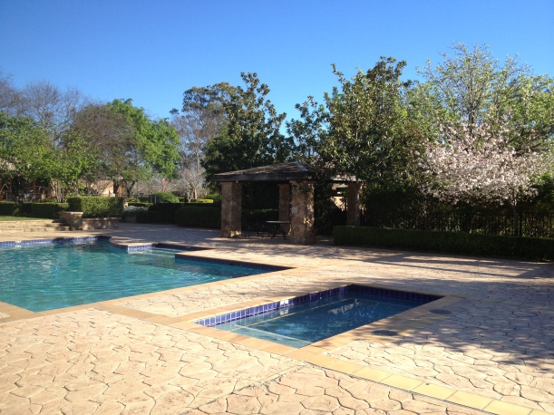 Cherry blossoms around the pool in the spring sunshine.