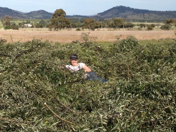 farmerfi prunings olive grove