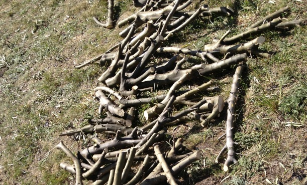 A few of those sticks...