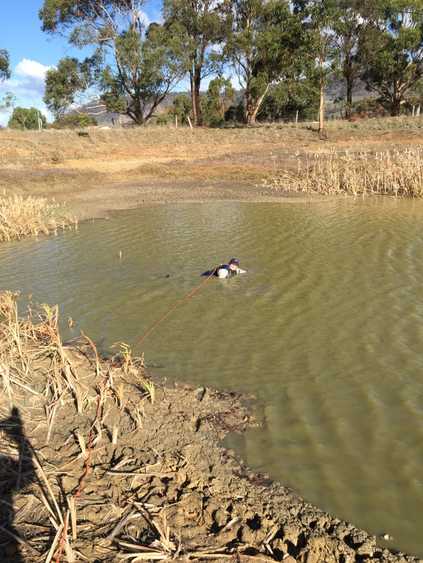 Swimming in the olive grove dam