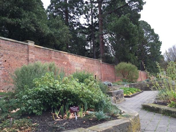 The Arthur Wall and herb garden