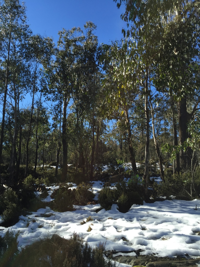 Snow in the Tasmanian Highlands
