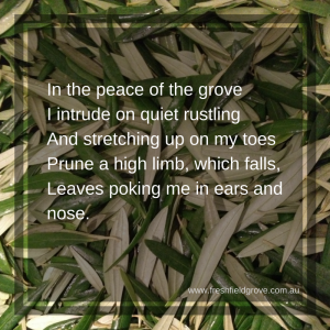 Olive leaf doggerel